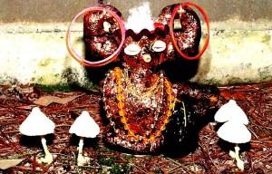 m_Abracadabra Mushrooms